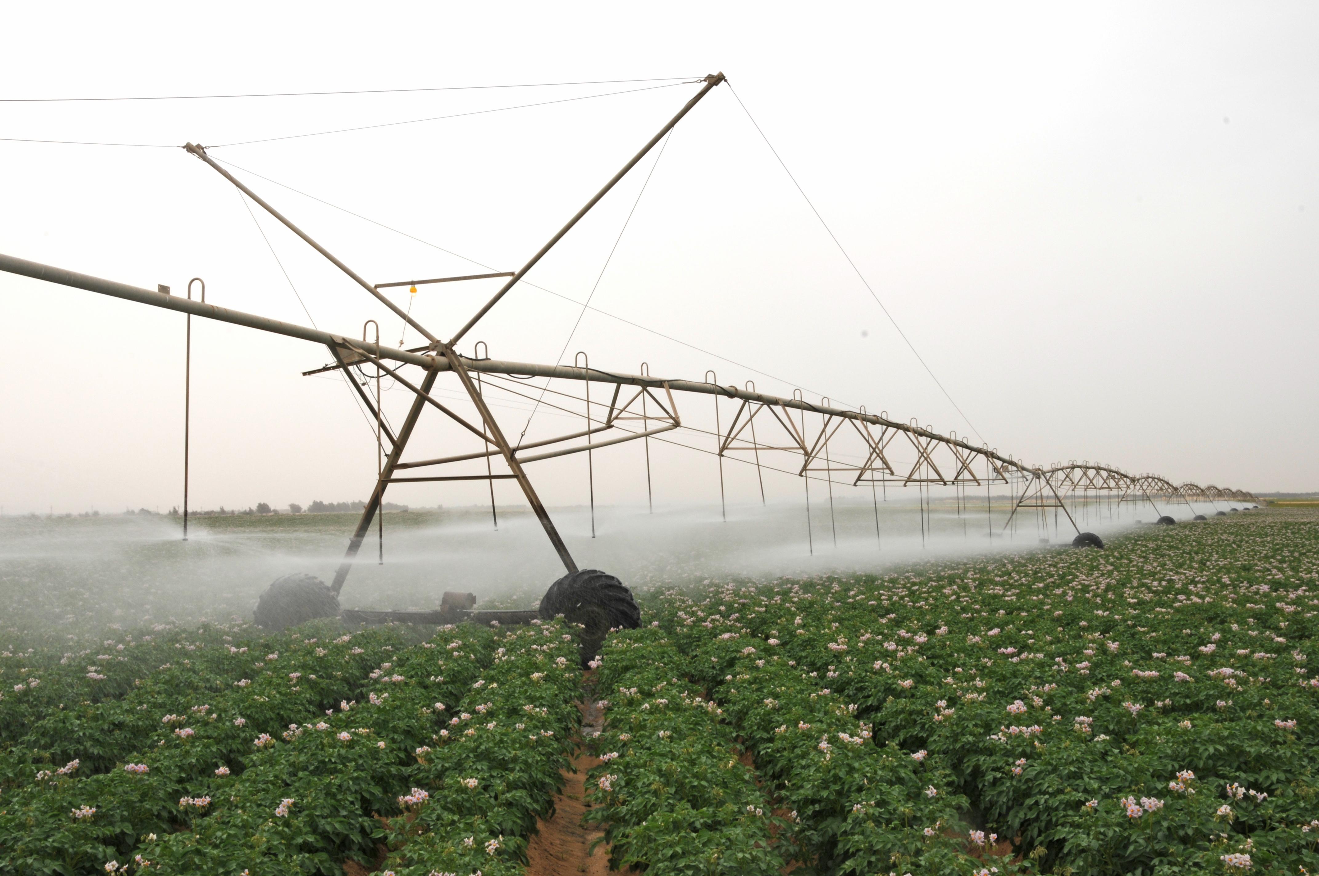 Alowaynat Farm
