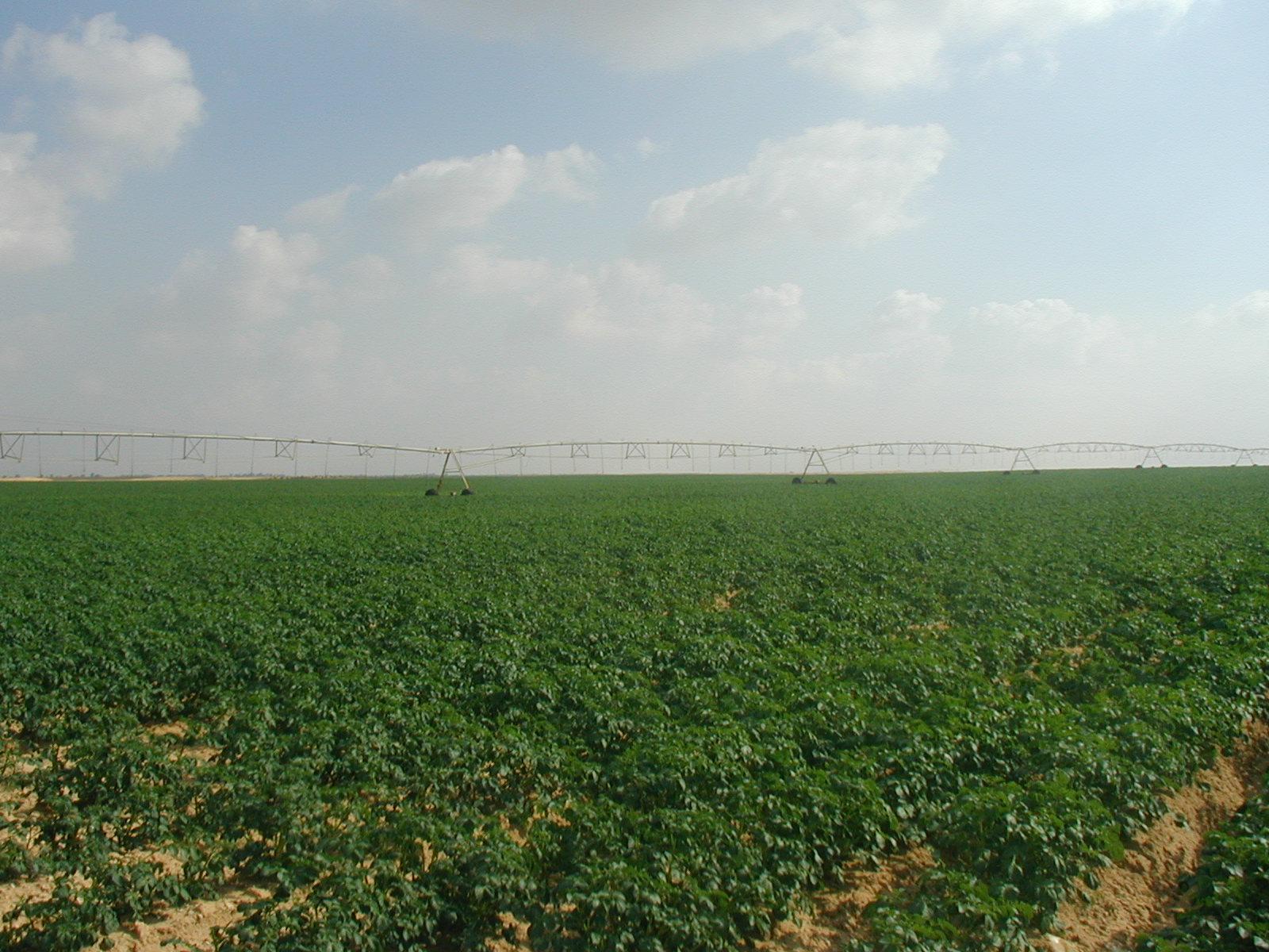 Nubaria Farm